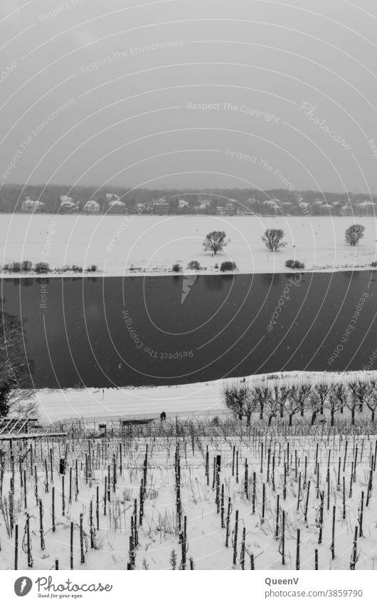 Weinberg an der Elbe in Dresden mit Schnee dunkel Winter Dezember Januar Kälte kalt grau Wasser Schwarzweißfoto Schneefall Schneeflocken Klimawandel Bäume