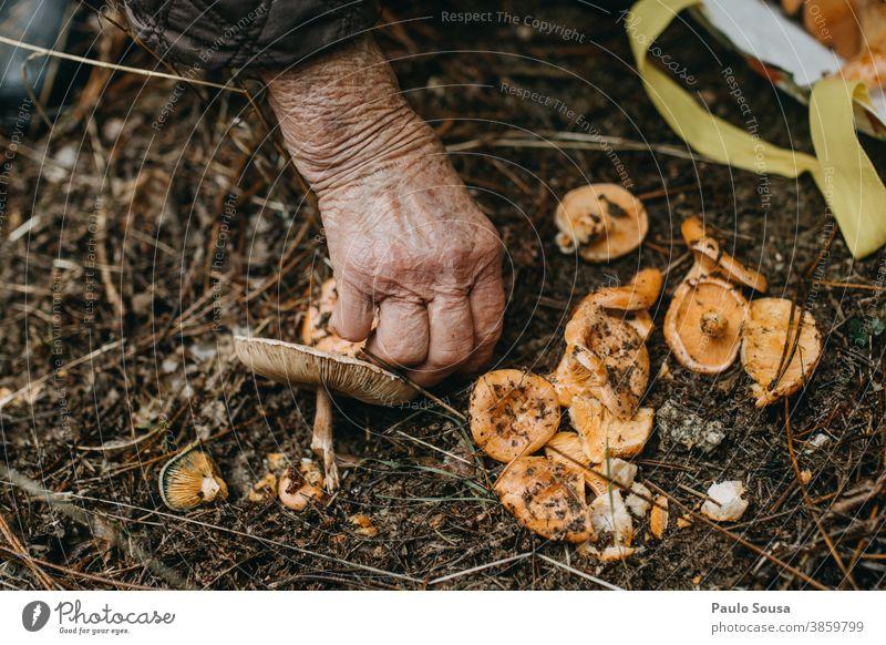 Pilze aus nächster Nähe von Hand pflücken Kommissionierung essbar Speisepilz frisch Frische Wald Umwelt lecker Tag Ernährung Lebensmittel Speisepilze Farbfoto