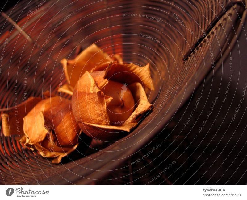 alt und rostig orange Dekoration & Verzierung Häusliches Leben Rost Stillleben Trockenblume Drahtkorb