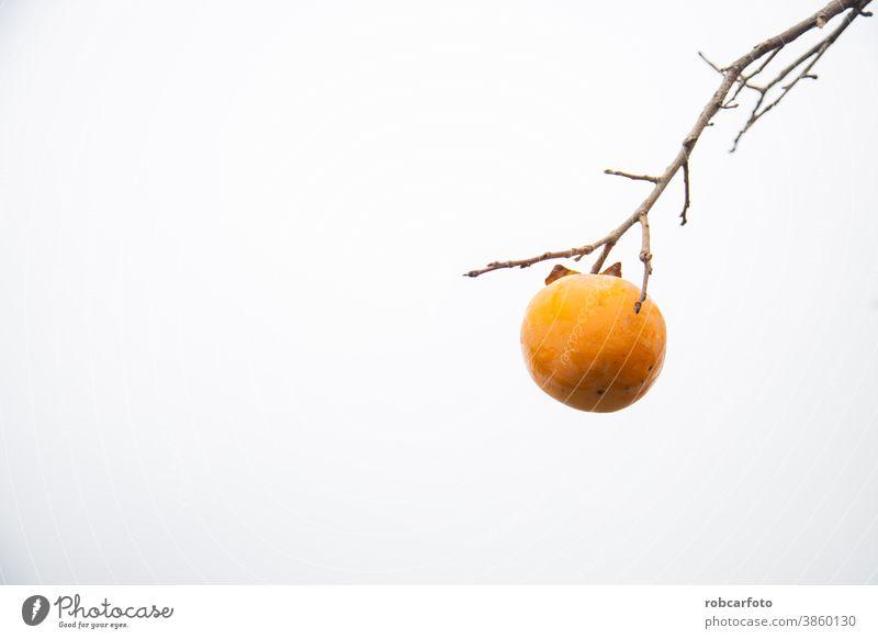Kaki-Obstbaum im Herbst, bewölkter Himmel im Hintergrund süß Pflanze Persimone Gesundheit im Freien orange Lebensmittel Baum Natur Ernte Frucht frisch natürlich