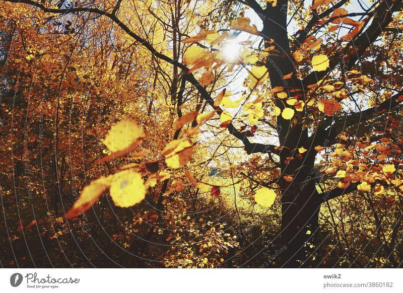 Auslaufmodell Baum Zweige Blätter hängen Umwelt Sonnenlicht Menschenleer Farbfoto Tag Schönes Wetter Natur Außenaufnahme Wald Wachstum Wolkenloser Himmel
