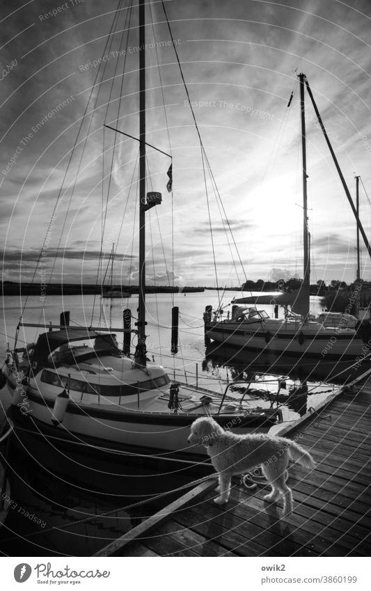 Aufpasser Wasser Schönes Wetter Himmel Wolken Horizont Jacht Segelboot Hafen Anlegestelle Sportboot Schifffahrt dunkel Sicherheit ruhig Idylle Zufriedenheit