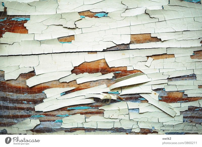 Alte Segmente Holz alt Muster Menschenleer abblättern verfallen Zahn der Zeit Spuren blau Farbrest Vergänglichkeit Farbfoto Detailaufnahme weiß abstrakt