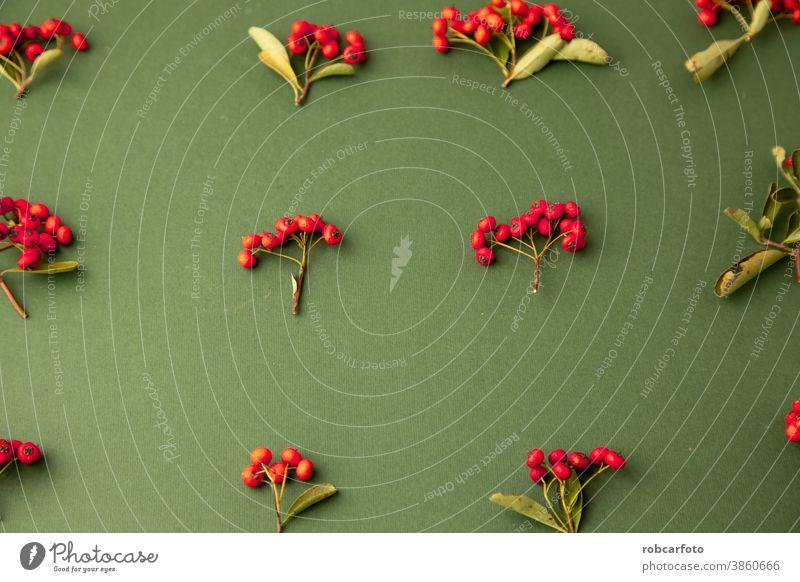 weihnachtlicher Hintergrund mit roten Beeren der Pyracantha coccinea-Pflanze Rahmen Weihnachten Borte Feiertag Winter festlich Postkarte Saison fröhlich Schnee