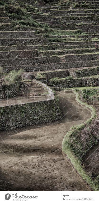 Terrassenfeld für den Reisanbau Banane Philippinen Berge u. Gebirge Natur ifugao Asien Feld Landschaft reisen Ackerbau Tal schwarz Bauernhof Vietnam