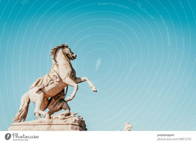 Pferde vor Schloss Schwerin Tier Außenaufnahme Tierporträt Statue Nutztier 1 Blauer Himmel Stein Mamor Skulptur Pferdekopf blau Tiergesicht Natur Menschenleer