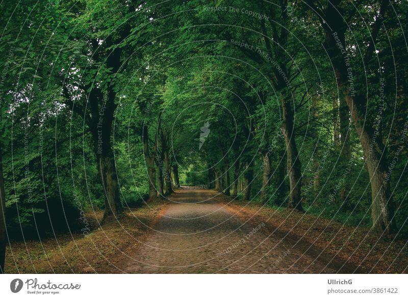 Eine typisch mecklenburgische Landstraße mit Kopfsteinpflaster, die von einer dichten Baumallee gesäumt wird. Allee. Weg gespenstisch ländlich idyllisch Vintage