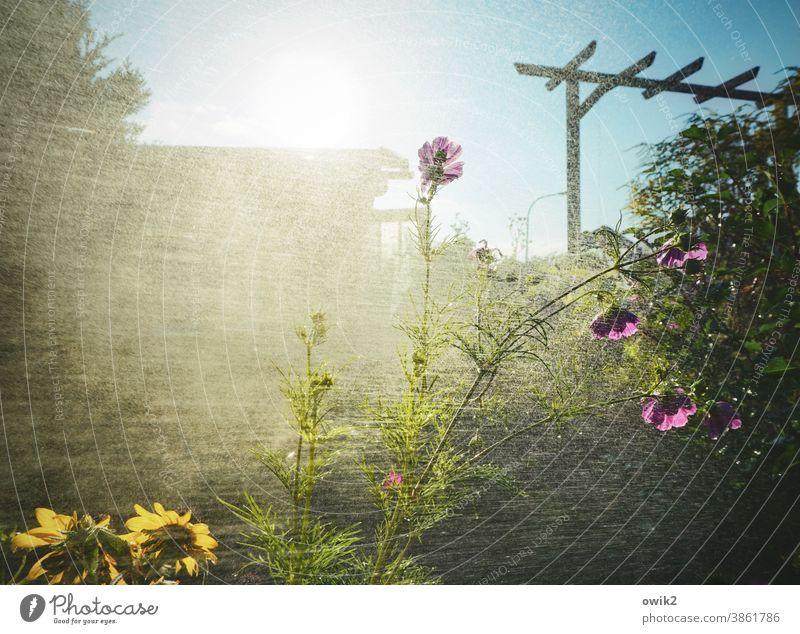 Sprühregen Garten Wasser Wassertropfen Regen nass feucht Pflanze Dusche gießen Frühling Nahaufnahme Lichterscheinung Außenaufnahme geheimnisvoll Wachstum