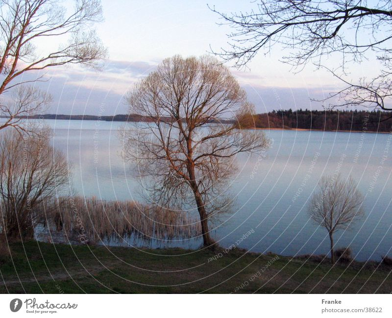 Frühlingssee Wasser Baum ruhig See