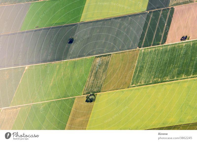 Nachbarschaften | Individualtität in engen Grenzen Feld Vogelperspektive Ordnung grün Ordnungsliebe planen Draufsicht Überblick Einsamkeit hellgrün ruhig