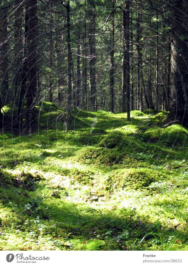 Schwedenwald Baum Sommer Wald Waldboden