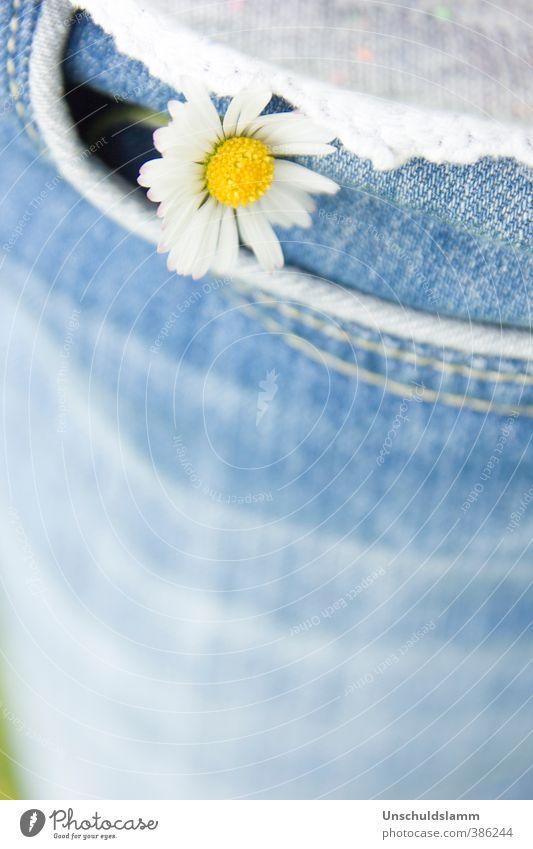 Glücksbringer Geburtstag Natur Pflanze Frühling Sommer Blume Blüte Wildpflanze Gänseblümchen Bekleidung Jeanshose Hosentasche Fröhlichkeit frisch hell klein
