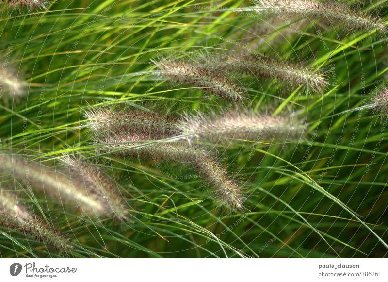Gras Natur grün Bewegung Wind zart Lichtspiel