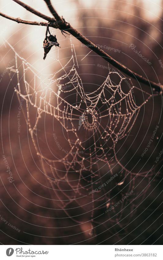 Spinnennetz mit Tautropfen im Gegenlicht Netz Wassertropfen Tropfen Makroaufnahme Nahaufnahme Farbfoto Menschenleer Netzwerk Reflexion & Spiegelung