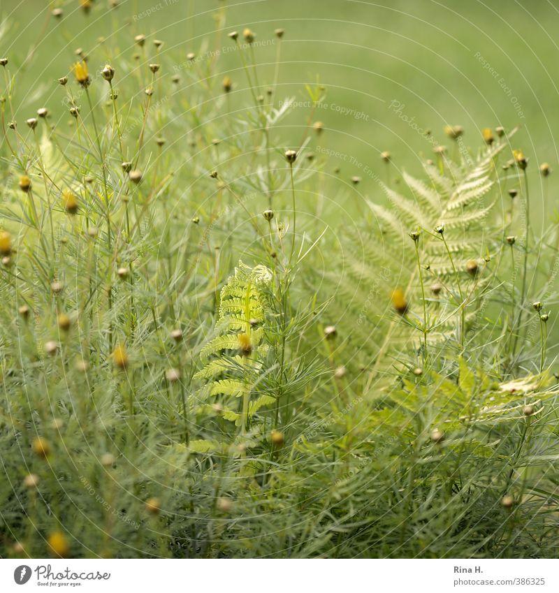 Umhegt Natur grün Sommer Pflanze gelb Garten natürlich hell Schönes Wetter Schutz Geborgenheit Farn