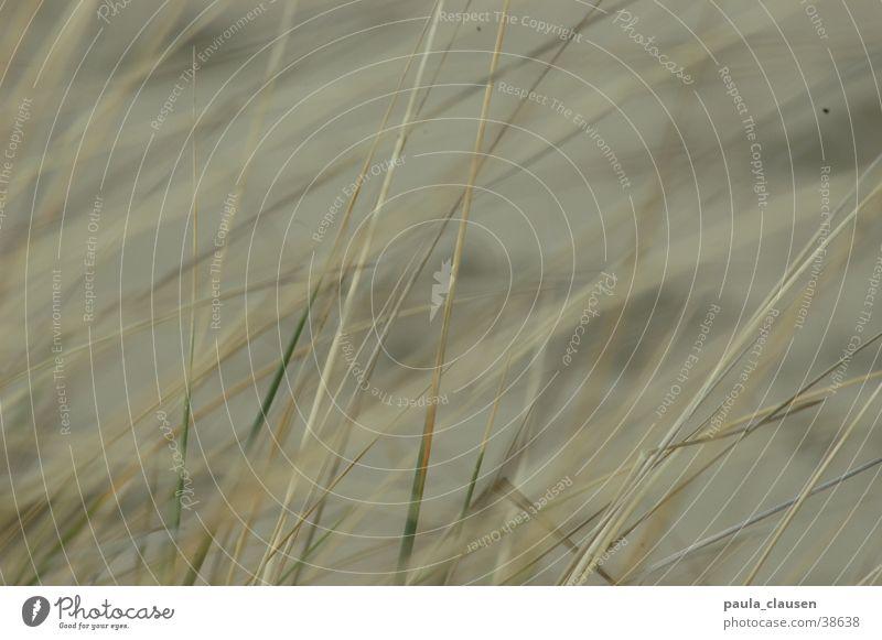 Gras Strand Sand hell beige Niederlande ausgebleicht