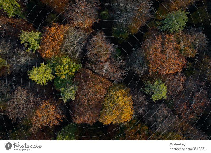 Wald aus Vogelperspektive Bäume laubbäume herbst Natur Landschaft Herbstfarben freizeit Herbstlaub Herbstwald Blätter Herbstlandschaft Außenaufnahme