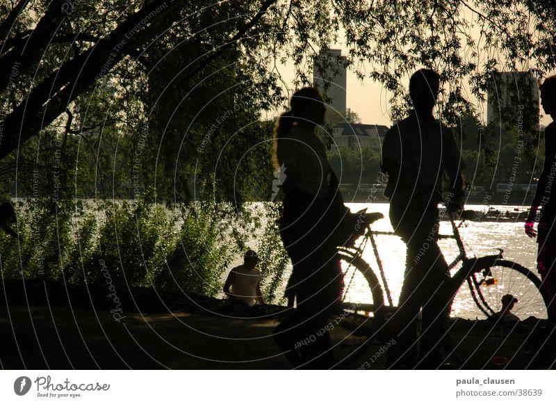 fahrradfahren Fahrrad Gegenlicht Köln Sandstrand Trauerweide Rhein Schatten Küste 2 personen Weide