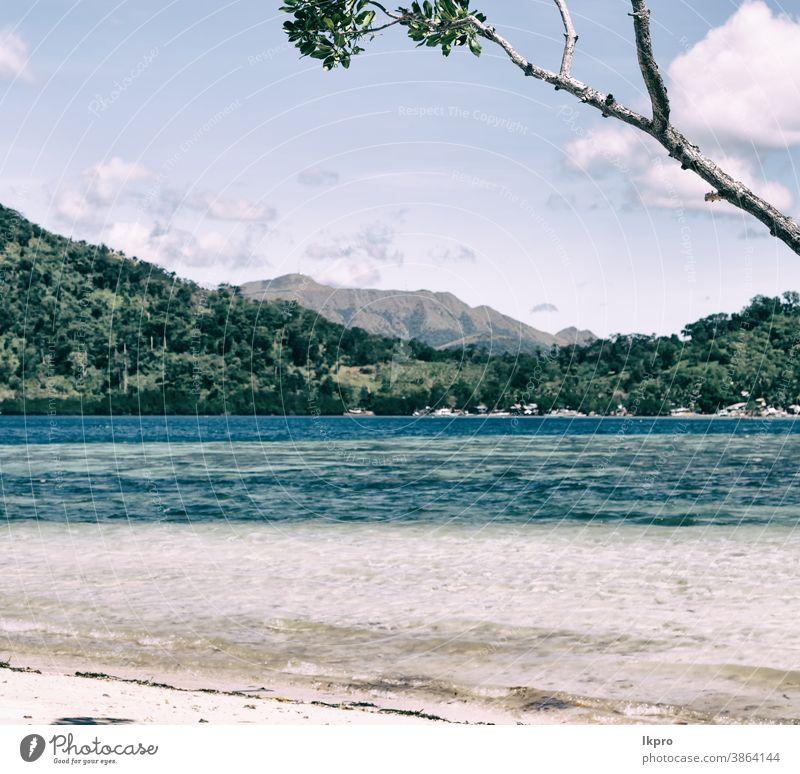 in der schönen Insel Kosatlinie und Baum Strand Philippinen tropisch Handfläche Sand Urlaub MEER Sommer Meer Paradies reisen Landschaft Wasser sonnig Küste