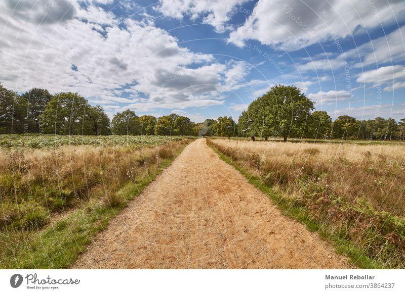 Fotografie der Straße auf dem Feld mit Himmel Landschaft ländlich Sommer Natur Wiese Horizont Gras grün blau Sonnenlicht Pflanze Frühling Hintergrund Ackerbau