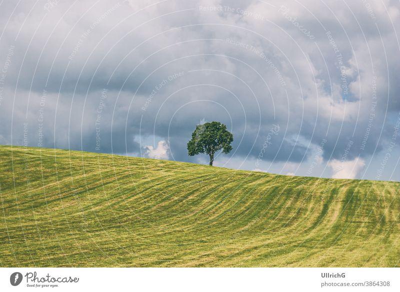 Einzelner Baum auf einem Hügel in ländlicher Umgebung im Sommer bei Gewitterstimmung. Landschaft Single ländliches Gebiet idyllisch Wiese Grasland Saison