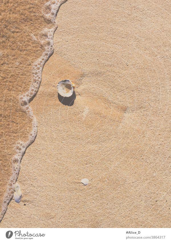 Jakobsmuschel auf Sandstrand mit Wasserwelle top view journey peaceful freedom wave alone wild seashell space outdoors object coastline beautiful calm leisure