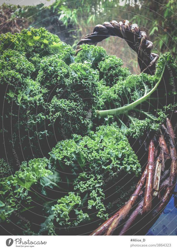 Grünkohl in Korb Ansicht von oben background brassica cabbage closeup curly detox diet farm food frame fresh fresh kale freshness garden green green food