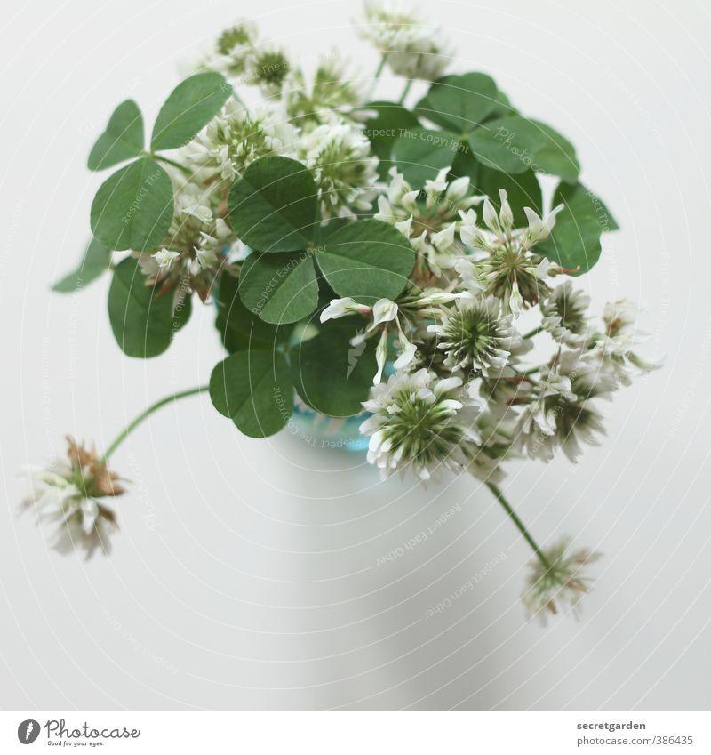 der duft der kindheit. grün schön weiß Pflanze Sommer Blume Frühling Glück Religion & Glaube Garten Geburtstag Tisch Geschenk Zeichen Blühend Blumenstrauß