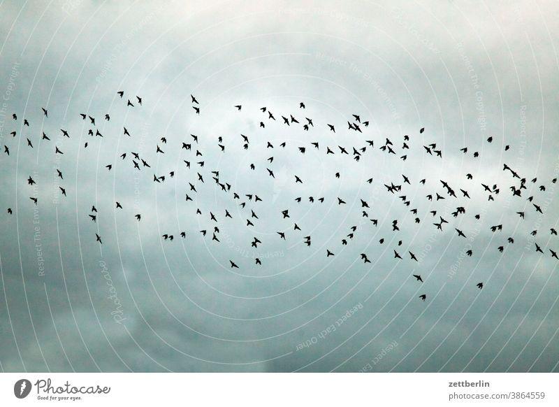 Vogelschar oder Vogelschwarm? abend bewegung flugbahn flugplatz himmel menschenleer natur textfreiraum verkehr weite vogel vogelschar vogelschwarm schoof