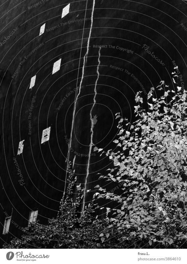 Eine schwarze Hausfassade Fenster Gebäude Wand trist Fassade Stadt Birke Baum Herbst