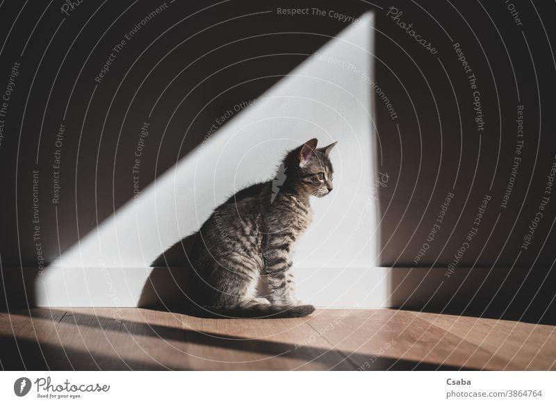 Katze sitzt im Haus und genießt das Sonnenlicht Sitzen im Innenbereich Licht Schatten Kontrast eine Haustier Porträt heimisch niedlich Tier aussruhen Katzenbaby