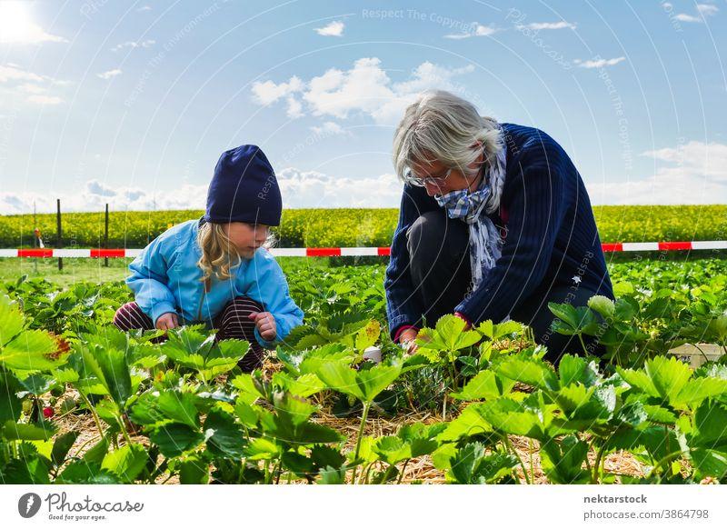Kind und Grossmutter beim Pflücken von Feldfrüchten in der Landwirtschaft Frau Großmutter Ackerbau Ernte Kommissionierung Suppengrün Kaukasier in voller Länge
