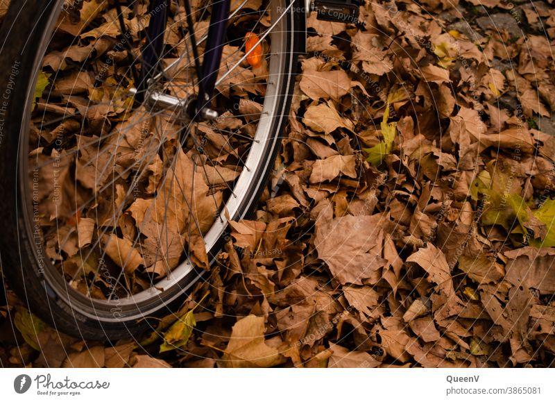 Nahaufnahme von einem Fahrradreifen mit gefallene Bläter in Herbst Blätter orange golden Blatt farbenfroh Natur Reifen Verkehr Verkehrswege Fahrradfahren Umwelt