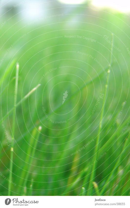 neulich im park Wiese Gras Park Wachstum liegen Grasland