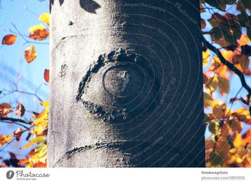 Auge in Baumrinde Augen Pupille Blick Augenheilkunde Sehvermögen Linse Sinnesorgane sehen drittes auge Optik Detailaufnahme Augenform Rinde Stamm Baumstamm