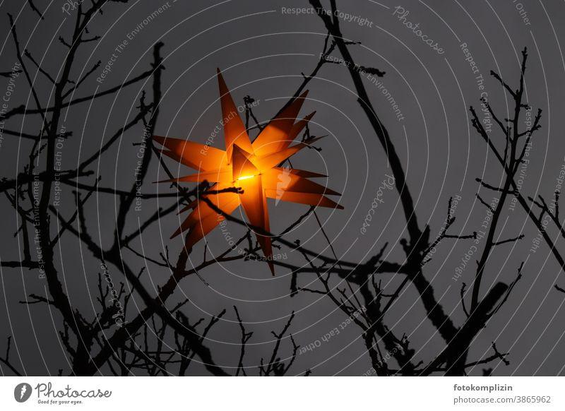 leuchtender Sternlampion zwischen Zweigen in der Nacht Weihnachtsstern Weihnachten & Advent Laternenlicht gold sterne Weihnachtsdekoration Weihnachtsstimmung