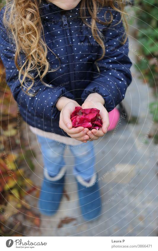 Kleines blondes Mädchen hält Rosenblütenblätter in den Händen wenig Blütenblätter Roséwein Blume Halt Beteiligung spielen Spielen Spaß Familie Wochenende Freude
