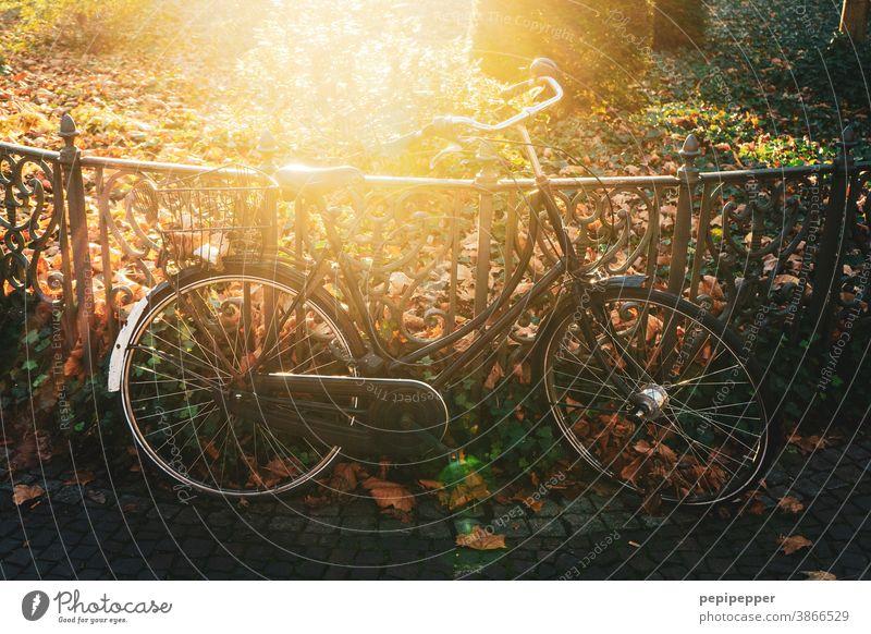 Fahrrad im Gegenlicht Park Sonne Sommer Außenaufnahme Licht Sonnenstrahlen Baum Menschenleer Umwelt Pflanze Farbfoto Sonnenlicht Schönes Wetter Natur Landschaft