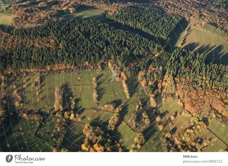 Wiesen und Wälder aus der Vogelperspektive von oben Wald Licht Schatten Baum Nadelbaum Laubbaum Landschaft Herbst Außenaufnahme Natur Schönes Wetter Umwelt
