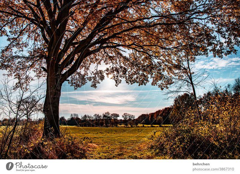 es herbstelt Baumstamm Landschaft Herbstlaub Herbstwald Sonnenstrahlen Idylle Blauer Himmel herbstspaziergang Herbstfärbung herbstlich Herbststimmung