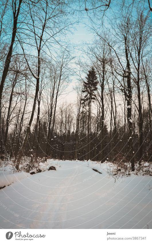 Winterwald mit Schlittenspuren und Fußstapfen im Schnee - dazu blauer Himmel und Schnee an Ästen und Zwiegen Schneespuren Wald kalt Baum Waldweg Frost Eis Tag