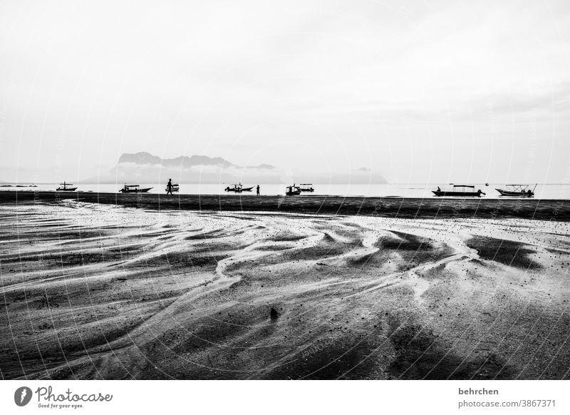 spuren hinterlassen Kontrast Licht Tag Außenaufnahme Sarawak Wasserfahrzeug kommen Rinnsal Sand bako nationalpark Malaysia Borneo Asien schön fantastisch Strand