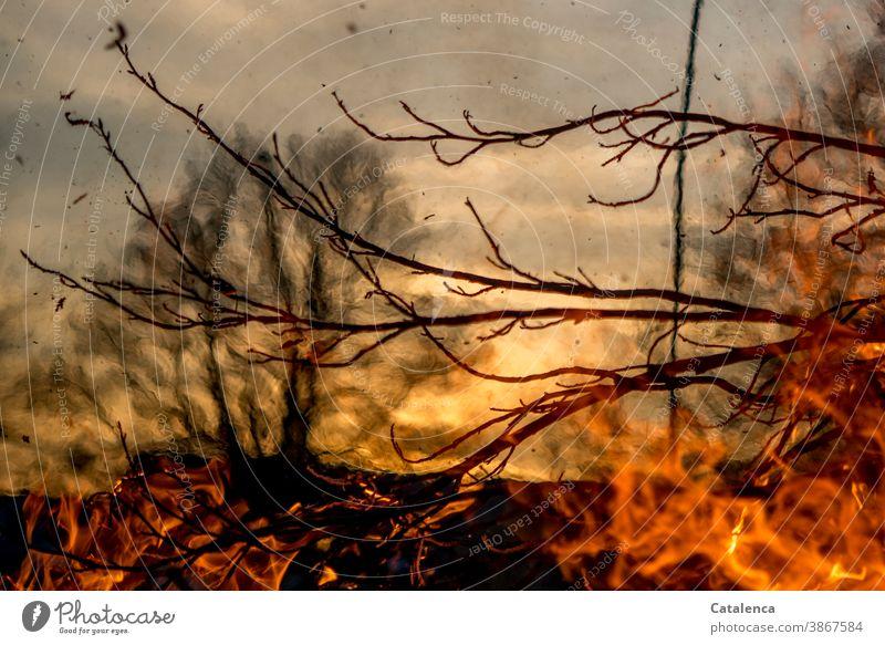 Lebensbruch   wenn Brände wüten Feuer Hitze Glut Asche Flammen verbrennen Feuerstelle glühen Holz Wärme Licht heiß Rauch gefährlich ausbreitend Tag Tageslicht