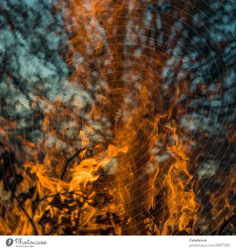 Flammen schlagen hoch, die Hitze verzerrt den Blick auf dem Baum im Hintergrund hochschlagen brennen Funken Urelement Asche Blätter Zweig heiß Scheiterhaufen
