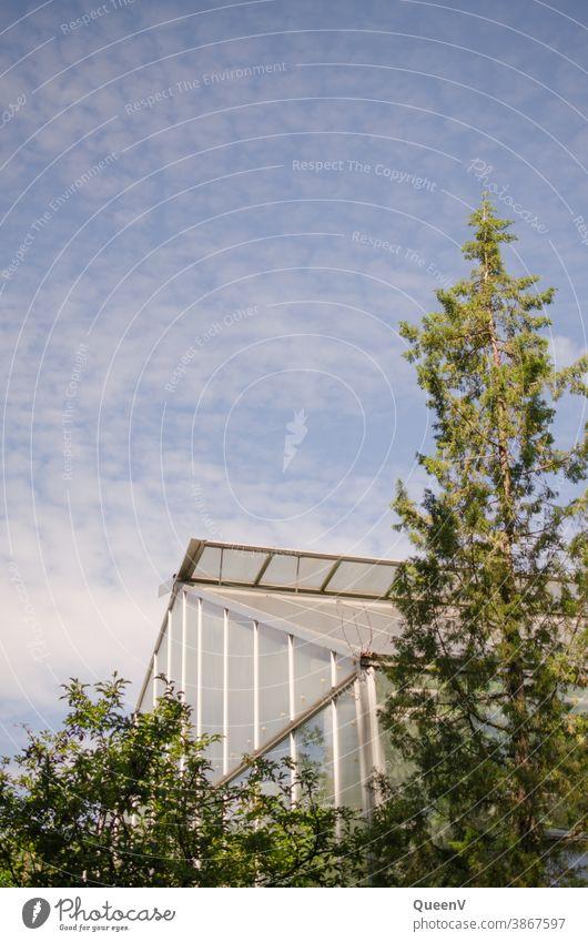 Glashaus mit Bäume und blauem Himmel glashaus treibhaus Gewächshaus Pflanze Planzen Außenaufnahme Baum Menschenleer Umwelt Garten Botanischer Garten exotisch
