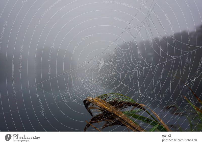 Melancholie Neblige Landschaft See neblig Außenaufnahme Idylle ruhig Pflanze Herbst Reflexion & Spiegelung Nebelsuppe diffus Bäume geheimnisvoll Menschenleer