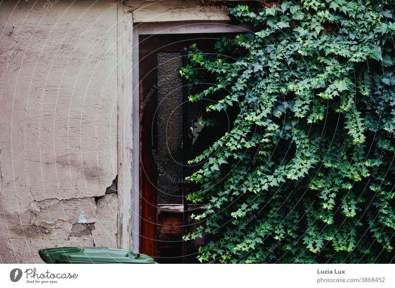 Eine Tür, durch die keiner mehr geht - zugewachsene Haustür, bröckelnder Putz, viel Grün und eine Mülltonne Wachstum verlassen vergessen alt Fassade Holt braun
