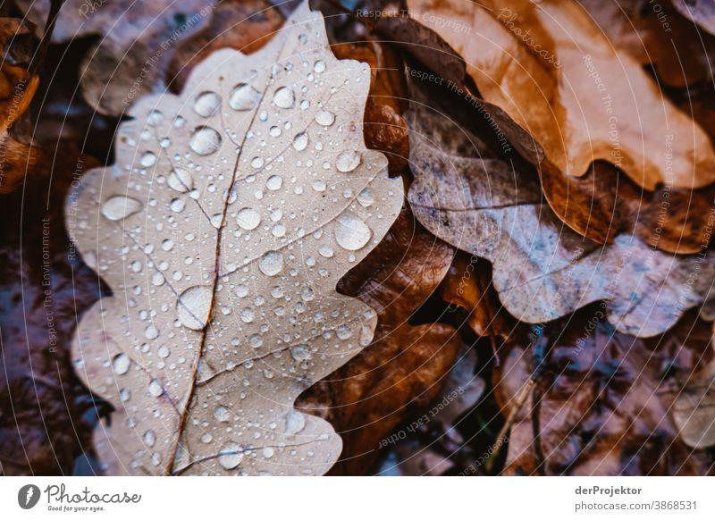 Herbstlaub am Boden Spaziergang Schwache Tiefenschärfe Kontrast mehrfarbig Tag Licht Textfreiraum unten Textfreiraum links Textfreiraum rechts Menschenleer