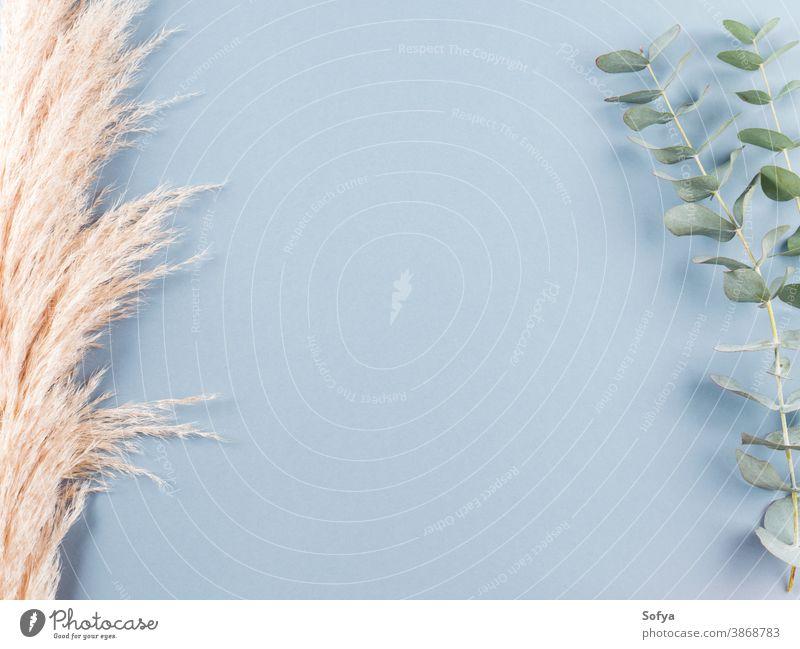 Trendiger botanischer Hintergrund mit Pampasgras Gras Pflanze Innenbereich Boho Eukaliptus getrocknet sehr wenige Design geblümt Natur neutral Herbst heimwärts