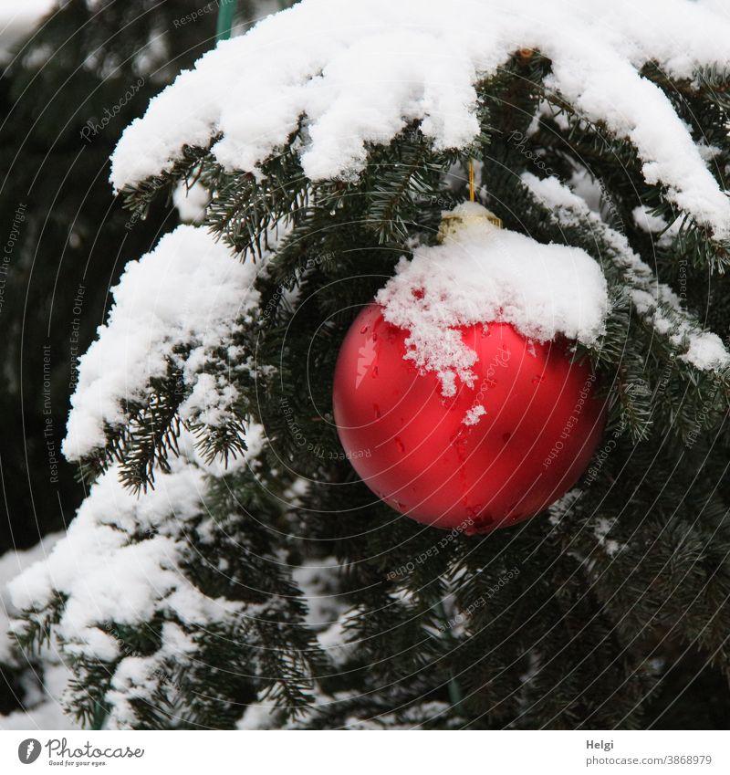 rote Weihnachtskugel mit Schneemütze hängt draußen an einem schneebedeckten Tannenzweig Christbaumkugel Weihnachten Winter winterlich Weihnachten & Advent